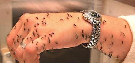 признаки паразитов в организме человека